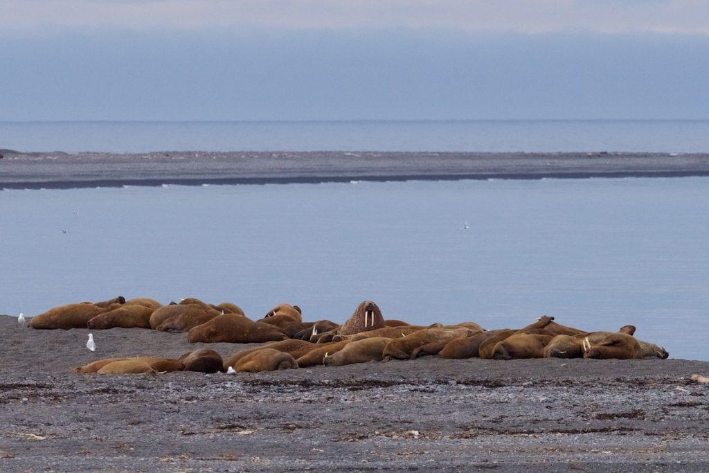 Svalbard 2016 JH 94-X3